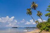 Beautiful beach with tropical palm trees — Stock Photo