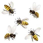Set of bees isolated on white — Stock Vector