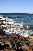 Paysage de la côte — Photo