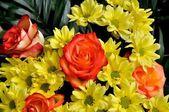 Flower cluster — Stock Photo