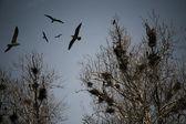 可怕的乌鸦 — 图库照片