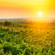 Vineyard — Stock Photo #14048374