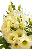 Lisianthus flowers — Stock Photo