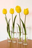 Four yellow tulips — Stock Photo