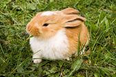 Cute rabbit — Stock Photo