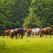 Стоковое фото: Horses in forest clearing
