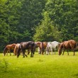 Foto Stock: Horses in forest clearing