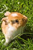 Roztomilý zajíček — Stock fotografie
