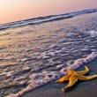 Starfish at beach — Stock Photo