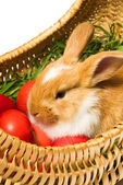 Very cute Easter bunny — Stock Photo