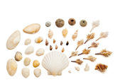 Arrangement with shells — Stock Photo