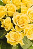 Closeup of yellow roses — Stock Photo