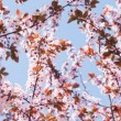 Branches with flowers — Stock Photo