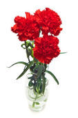 Red carnations — Stock Photo