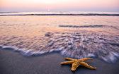 Sunrise and starfish — Zdjęcie stockowe