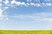 Brassica and sky — Stock Photo
