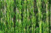 森林背景 — 图库照片