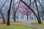 Niebla de otoño — Foto de Stock