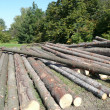 Logs — Stock Photo #32002429