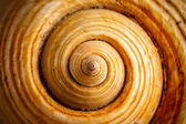 Shell Spiral — Stock Photo