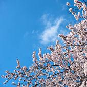 木の枝の開花の花 — ストック写真
