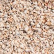 Background from shells in the sand — Stock Photo