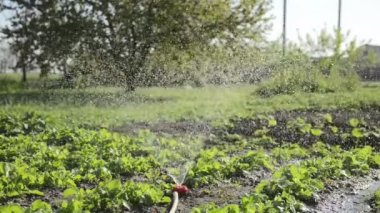 Sprinkler pour plants in garden. — Stock video