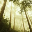 Fog in a forest — Stock Photo