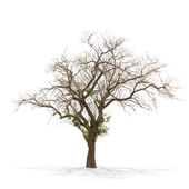 Dry dead tree isolated on white — Stock Photo