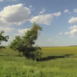 Rural location. — Stockvideo