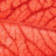 Blood vessels — Stock Photo