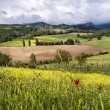 Stock Photo: Tusccountryside in spring