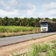 Stock Photo: Trucks for transport of sugarcane