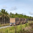 Постер, плакат: Trucks for transport of sugarcane