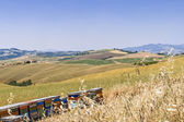 Hives of bees in the tuscan countryside, Italy — Stock Photo