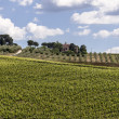 Vineyards of Chianti in Tuscany — Stock Photo #50004543