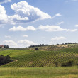 Vineyards of Chianti in Tuscany — Stock Photo #50005335