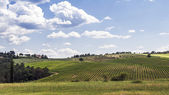 Vineyards of Chianti in Tuscany — Stock Photo