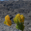 Autumn in Mustang trekking — Stockfoto
