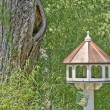 Bird feeder by tree — Stock Photo