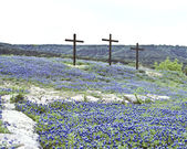 Three Crosses in Bluebonnets — Stock Photo