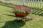 červené květy v trakaři — Stock fotografie
