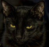 Closeup černá kočka — Stock fotografie