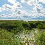Curonian lagoon. Kaliningrad region. Russia — Stock Photo #13463298