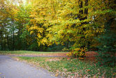 Yellow leaves in autumn park — Stock Photo