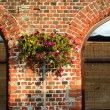 Flower on the old brick wall — Stock Photo