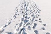 Fotspår i snön — Stockfoto
