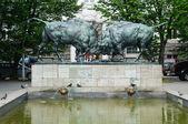 Walki bizon — Zdjęcie stockowe