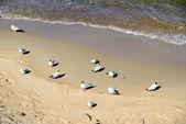Baltic sea beach — Stok fotoğraf