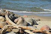 Pieces of wood and stones on shore — Foto de Stock